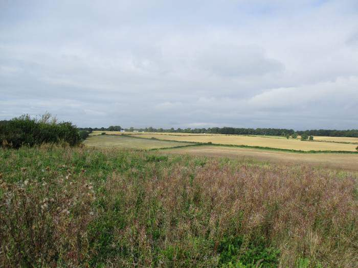 And across fields, with the M4 in sight (and sound)