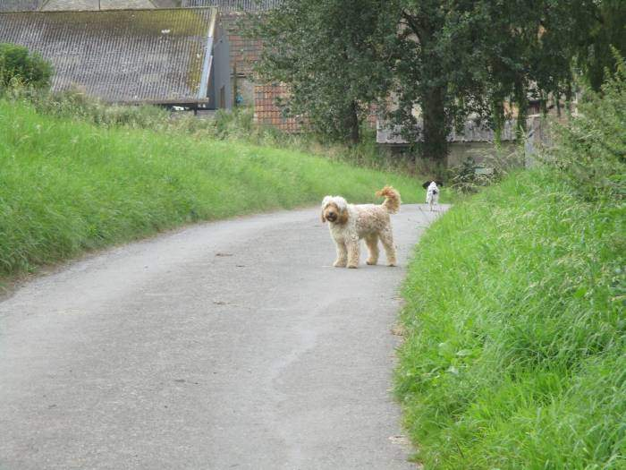 Two fierce guard dogs bark at us, and then the spaniel runs away!