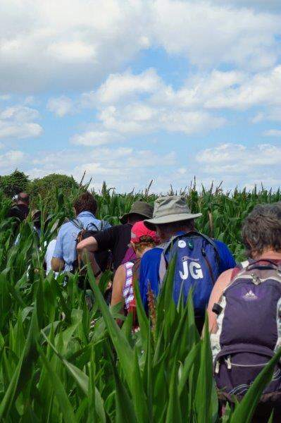 Yet another field of maize to fight our way through