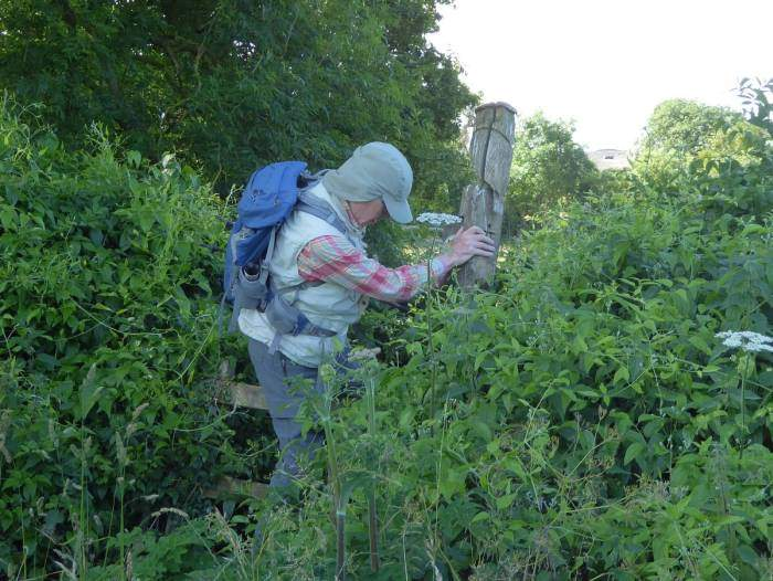 Mike keeps to the path over a wobbly overgrown stile which most of us avoid