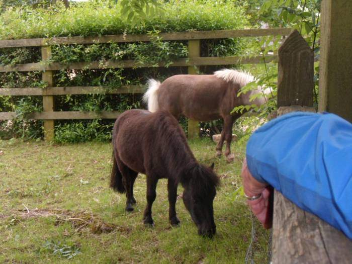 Tim tells us these are Icelandic ponies - we don't know whether to believe him or not!