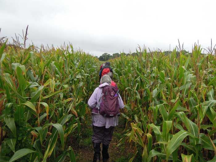 Then maize