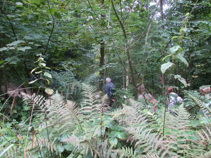 Interesting bracken and nettles