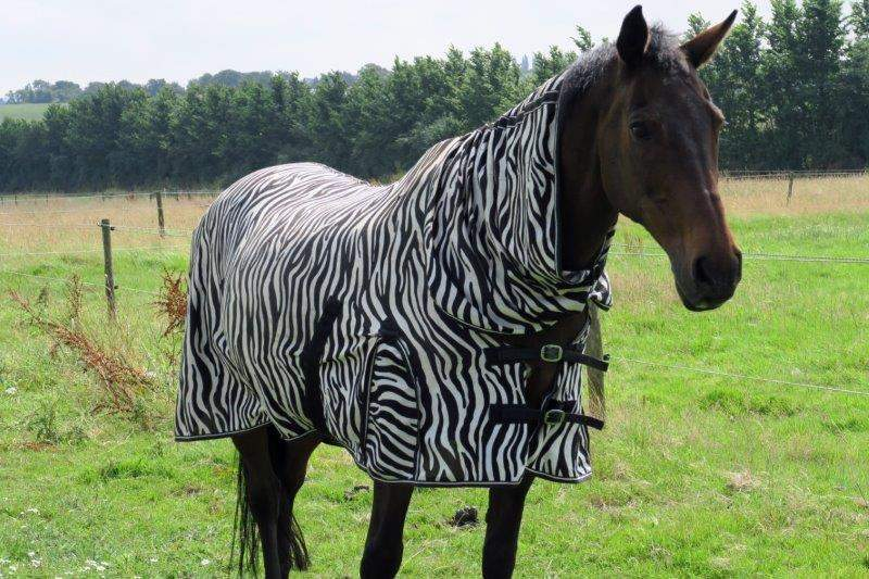 I really wanted to be a zebra
