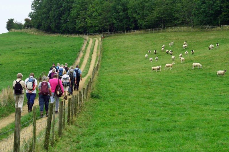 Then causing some excitement among the sheep