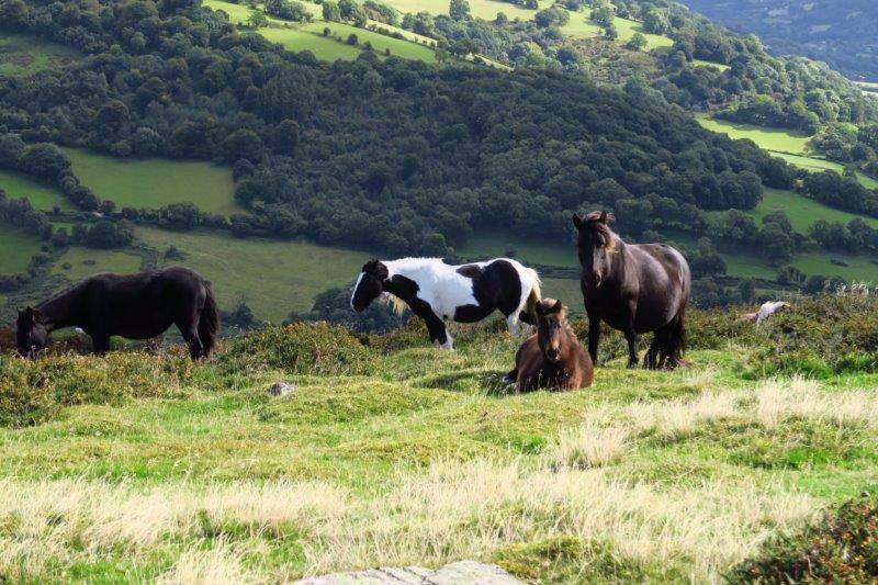 A small herd of ponies enjoying the sunshine