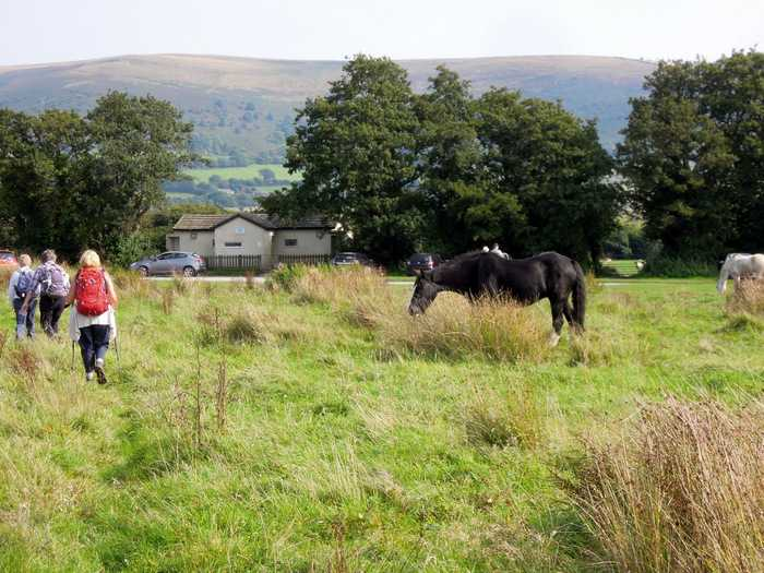 And we are soon back on Llangorse Common, where these horses live