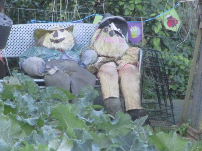 Cute characters in this allotment