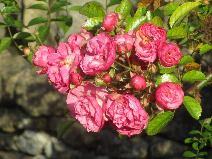 And Roses - in November?