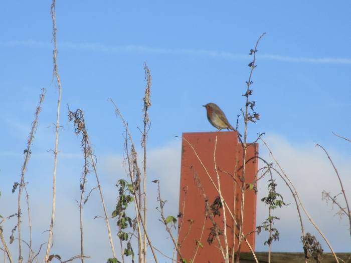 A robin joins us for lunch