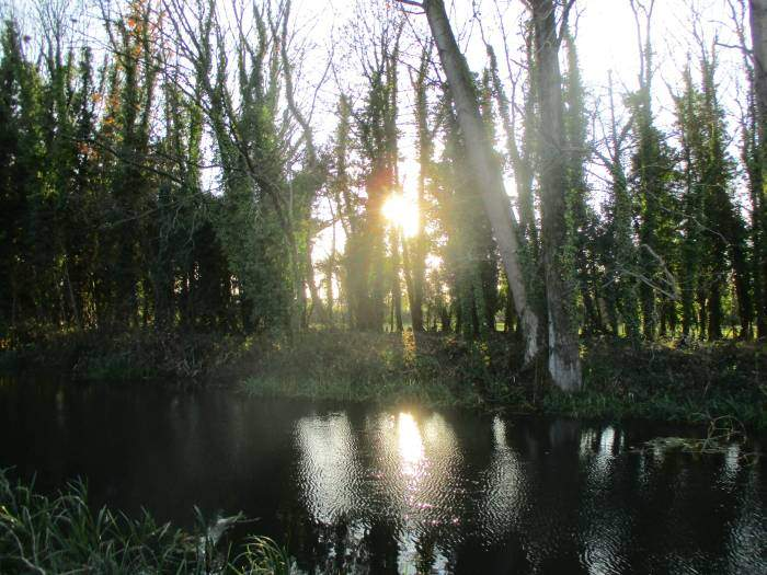 The afternoon sun shining onto the canal