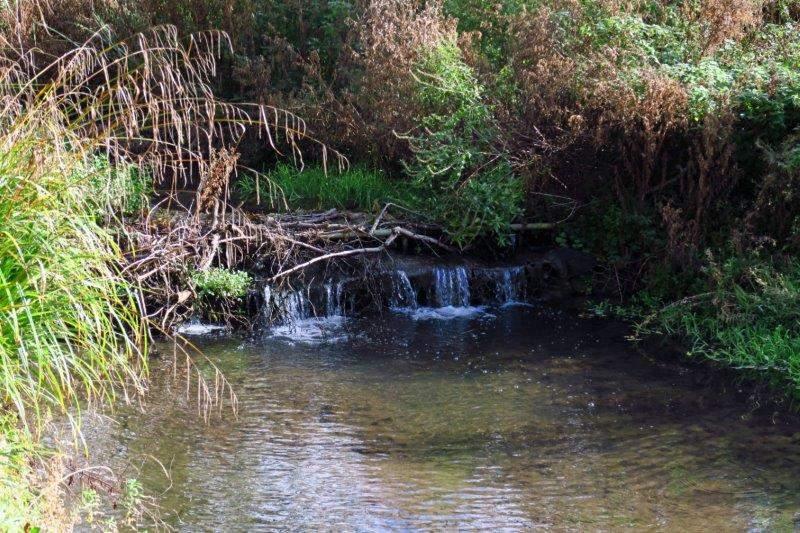 Along a stream