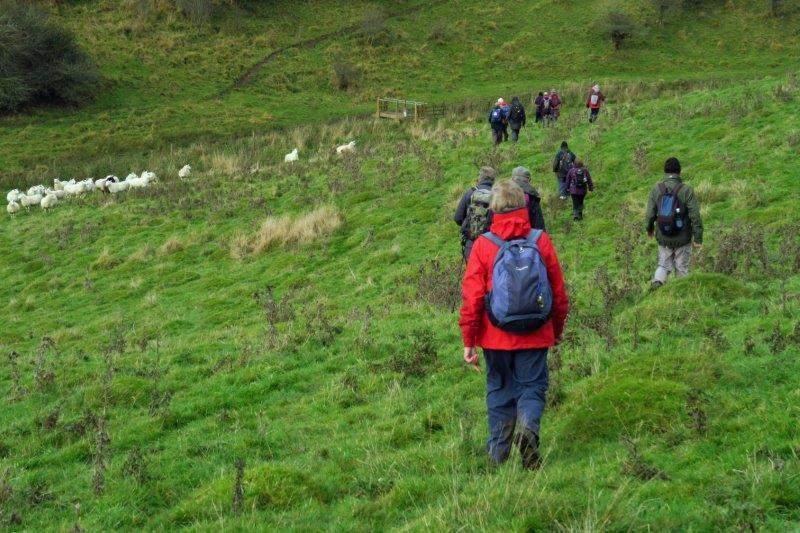 Downhill through a herd of sheep