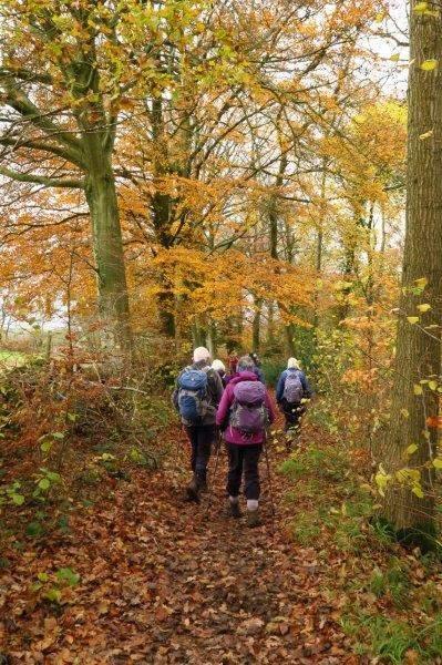Where we follow a leafy path