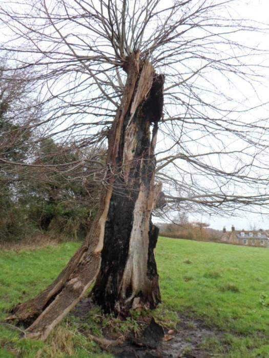 This old tree continues to survive - a recognisable landmark