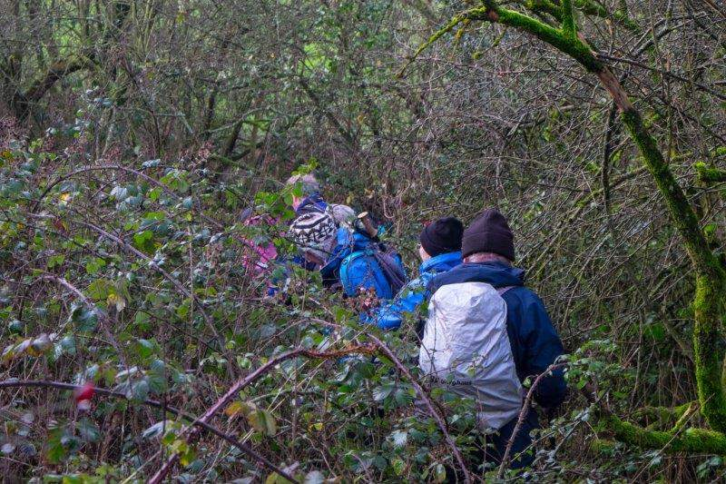 Which leads us down into some thick undergrowth