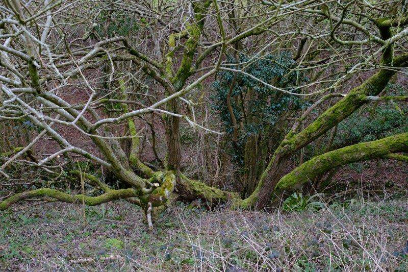 Some interesting arboreal formations
