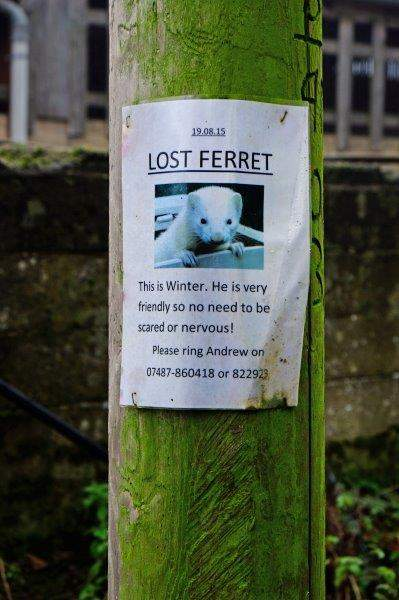 Still looking for him