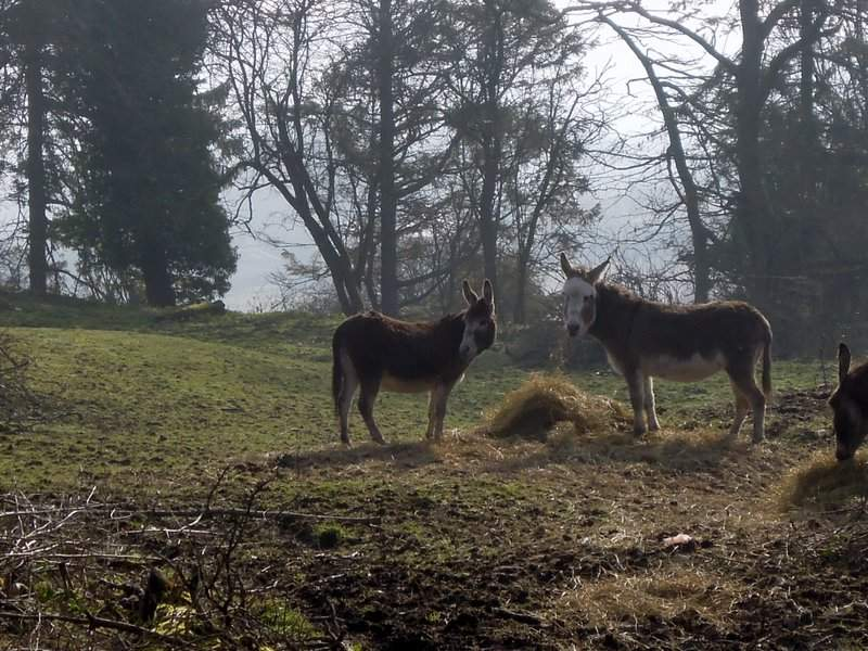 Watched by some curious donkeys*