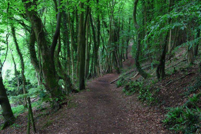 An avenue of trees