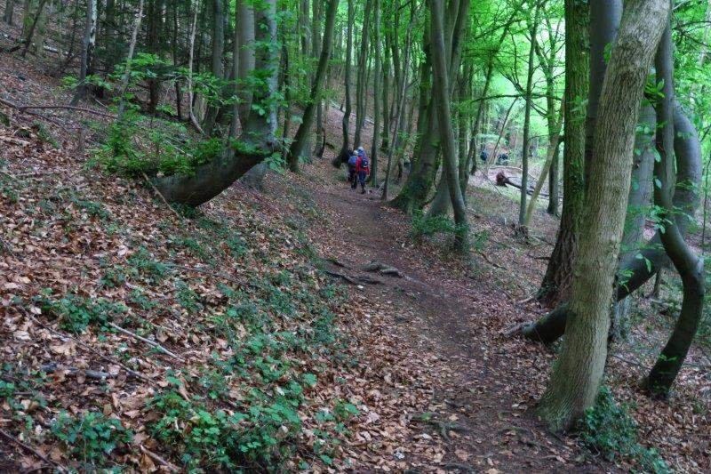 Then continuing up through the woods