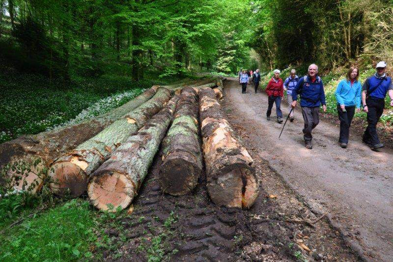 Where forestry work is much in evidence