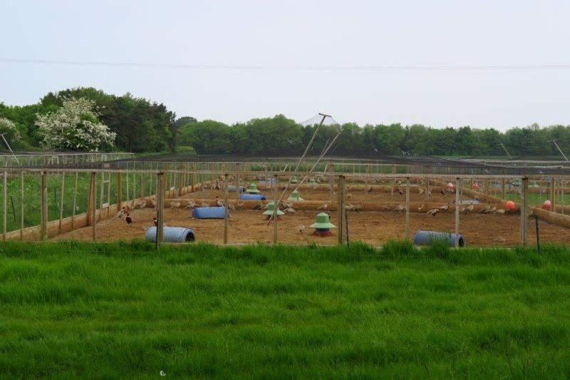 A game bird breeding facility