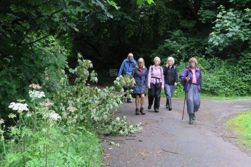 Walking through Hyde Park Farm