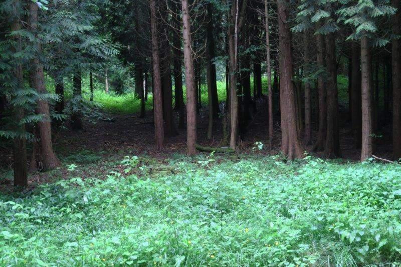 Our path takes us through Sapperton Woods