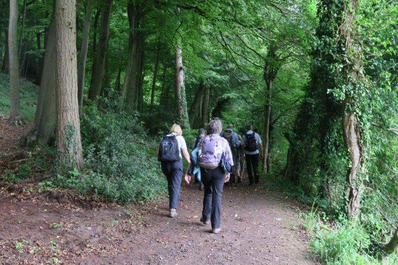 Our route takes us into Pitchcombe Woods