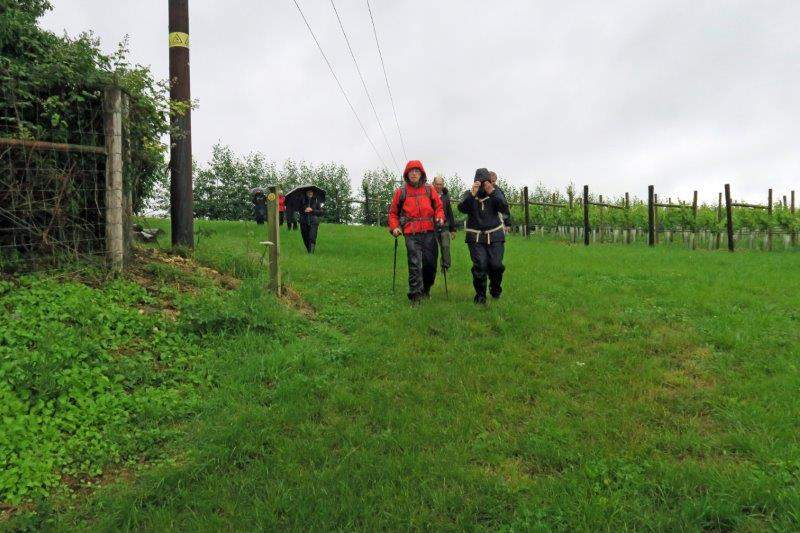 Into the vineyard