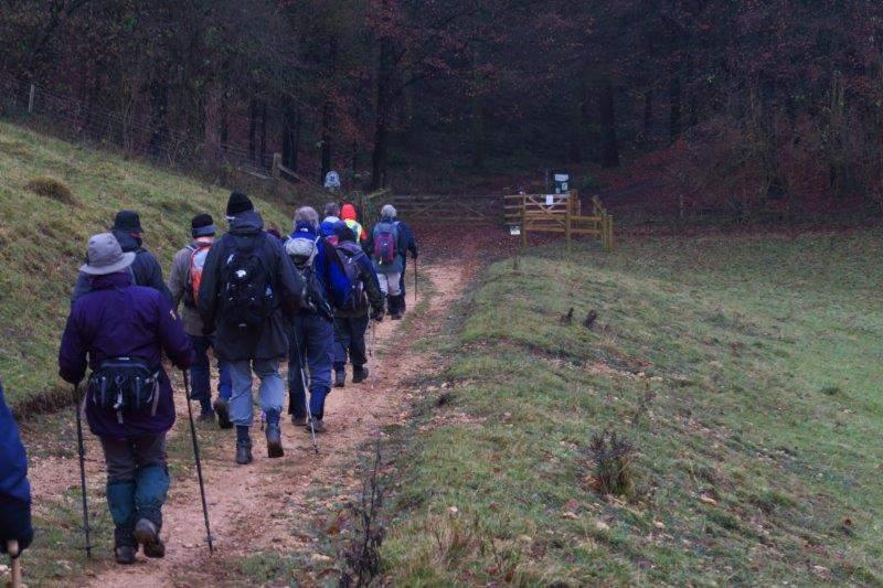 Towards Workmans Woods