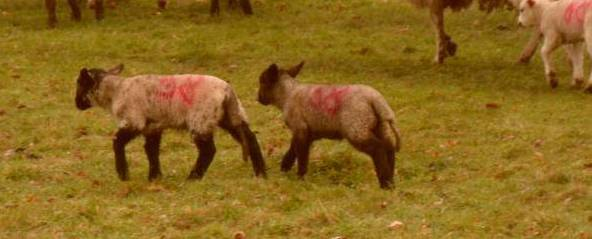 And the twins with matching black heads and legs