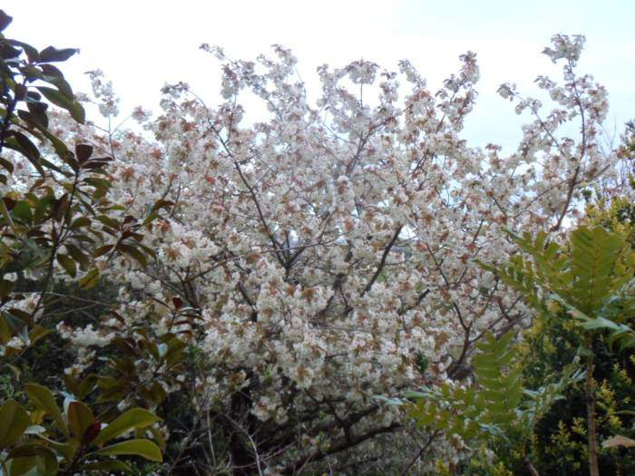 Blossom in a nearby garden