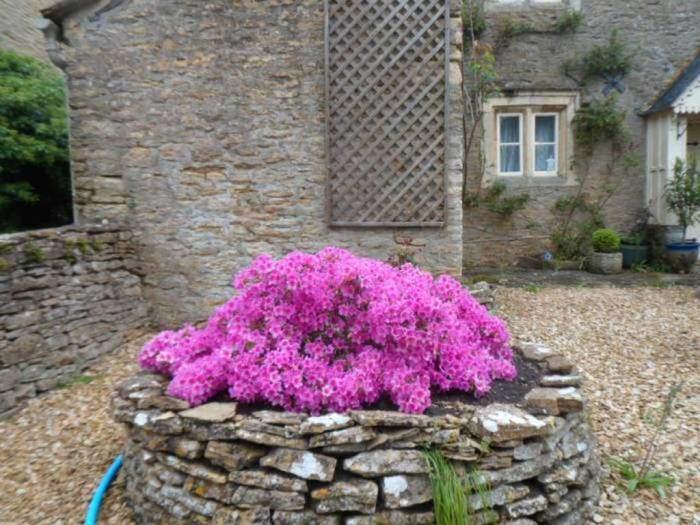 Colourful azaleas