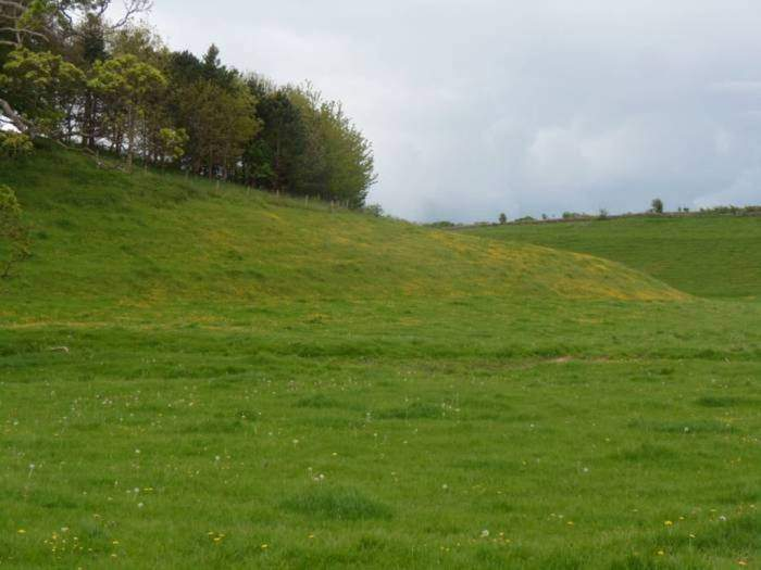 Banks of buttercups