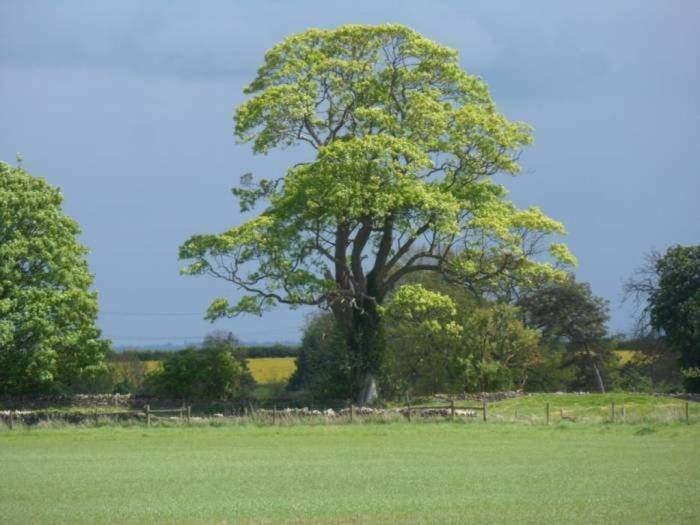 An impressive tree against the dark sky