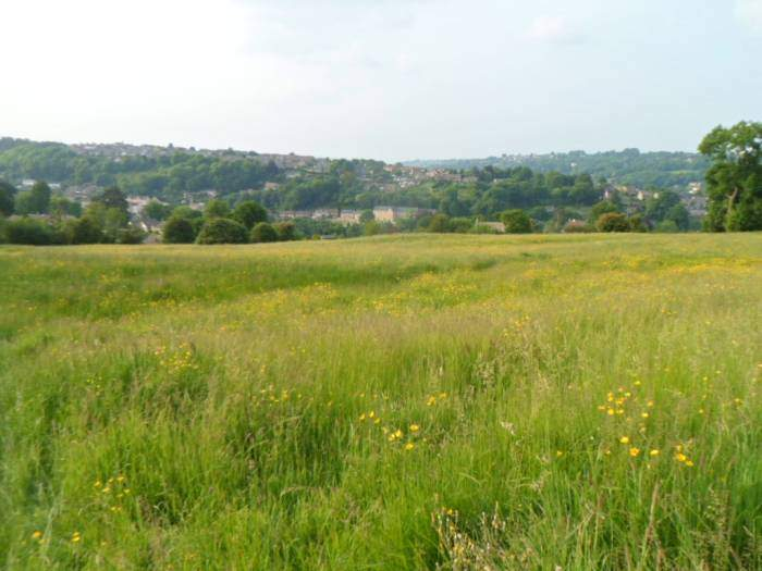 Looking across a field of buttercups to Nailsworth