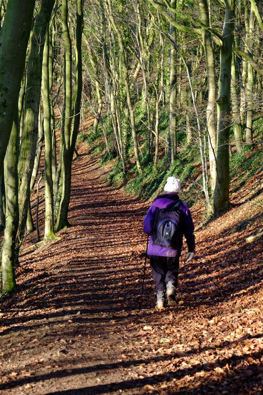 And back through Randwick Woods