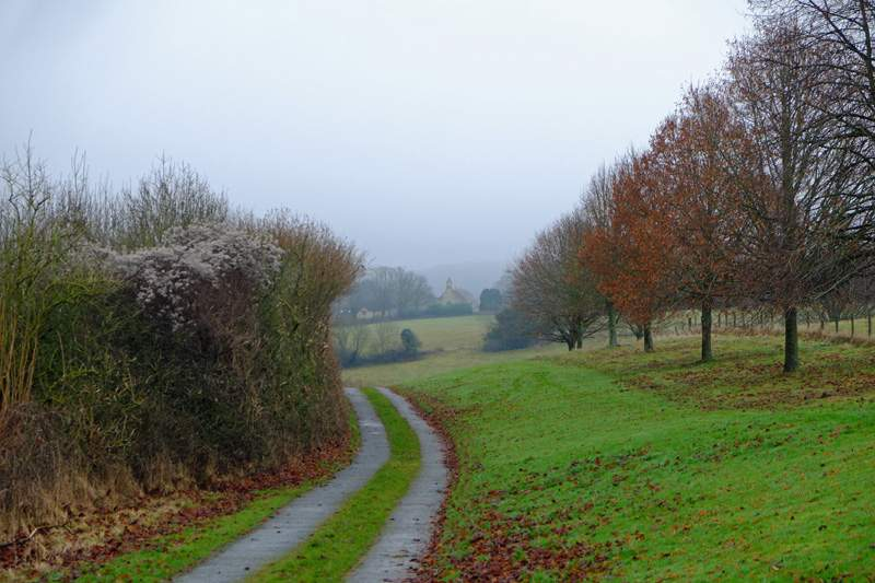 A line of lime trees - Shortwood Church in the distance