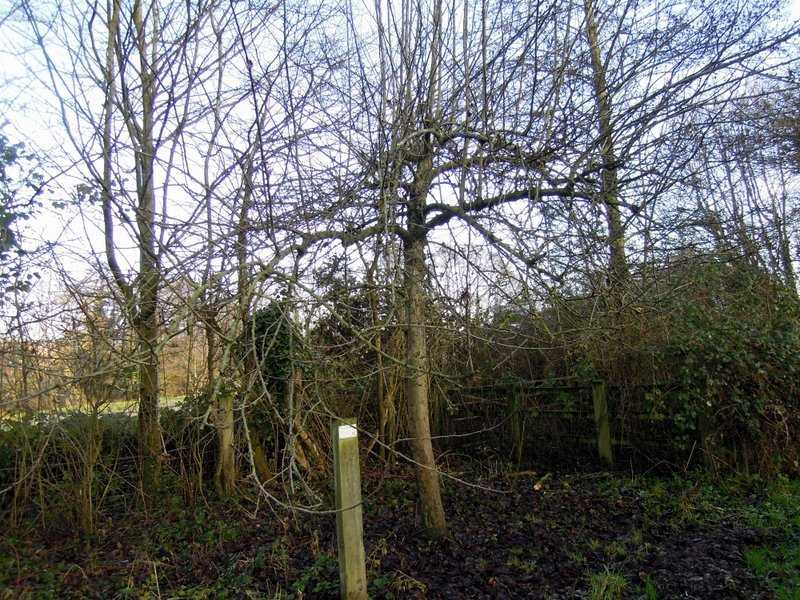 Past a community apple orchard including Ashmead's Kernel