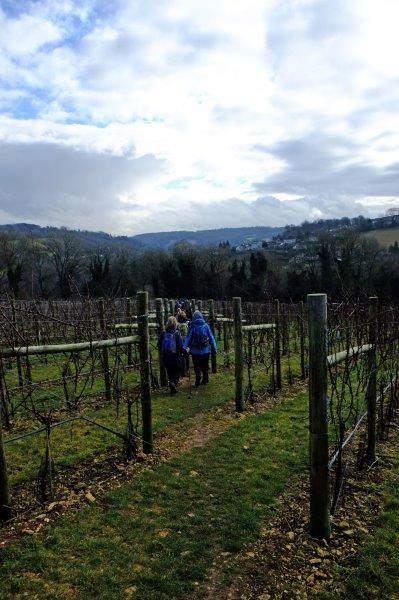 Then through the vineyard