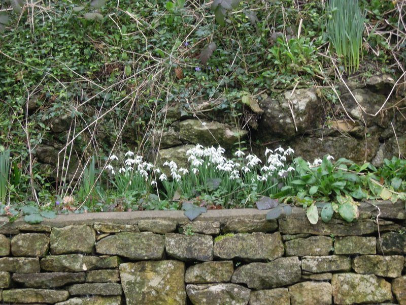 Past real snowdrops