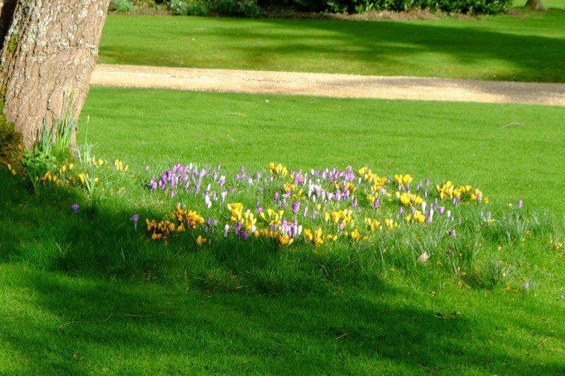 And a display of crocuses to greet us as we return to Painswick