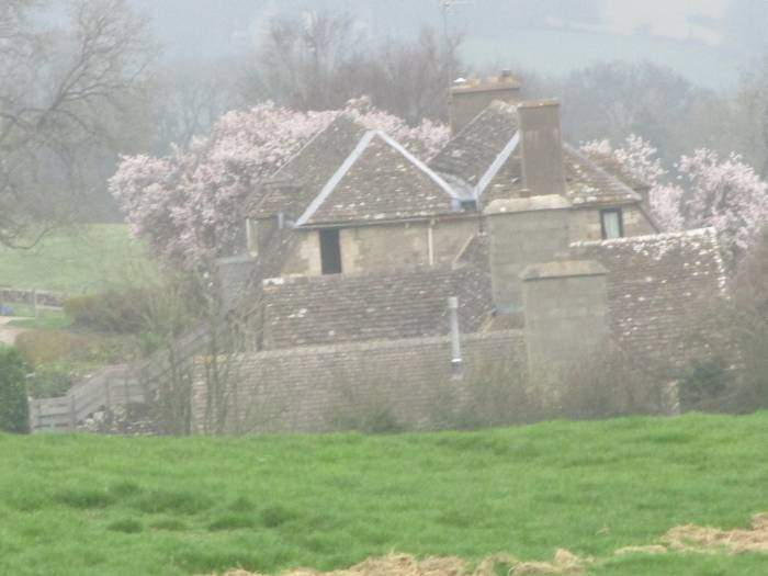 Blossom in the distance