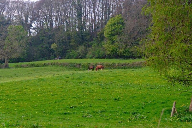 Horses grazing peacefully