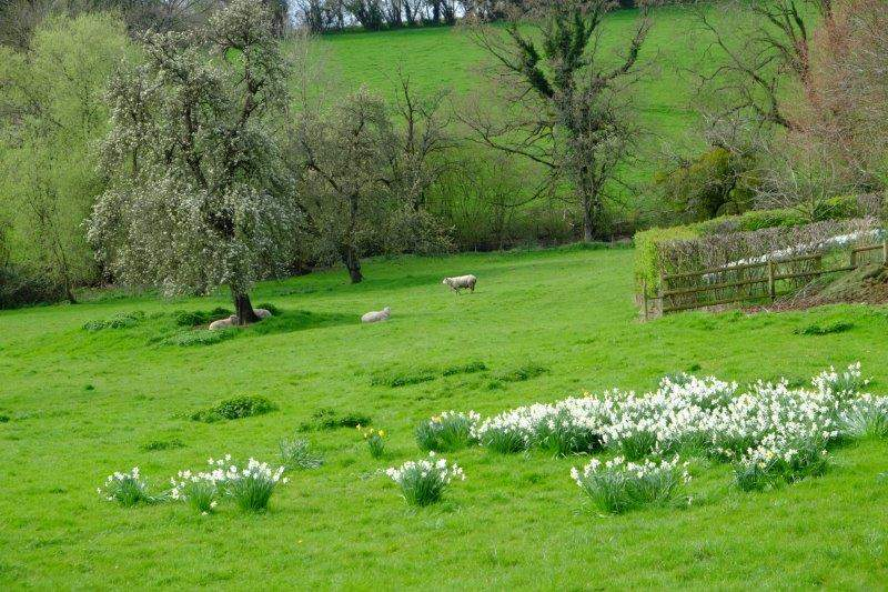 A peaceful rural scene