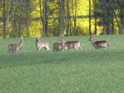 Some of us get delayed watching the deer