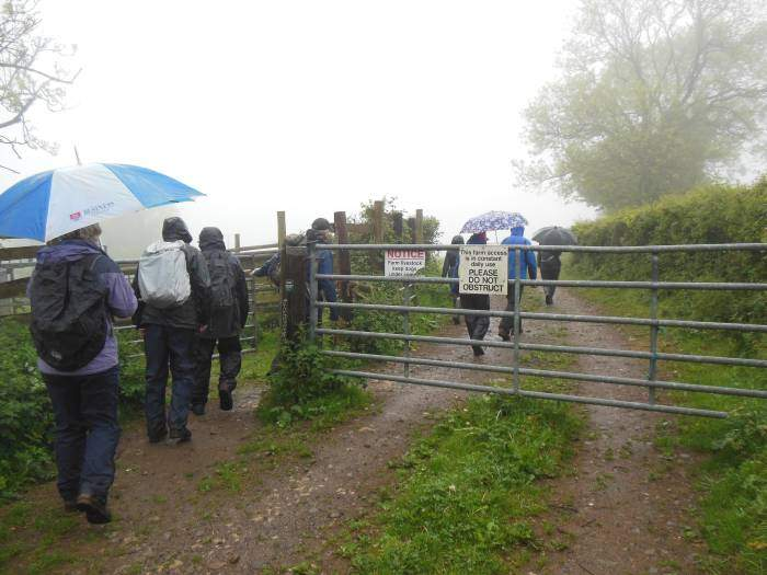 Brollies still up as we go into a field