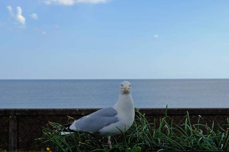 Watched by a seagull